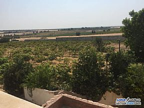 Farm 6 acre For Sale Cairo Alexandria Desert Road Giza - 5