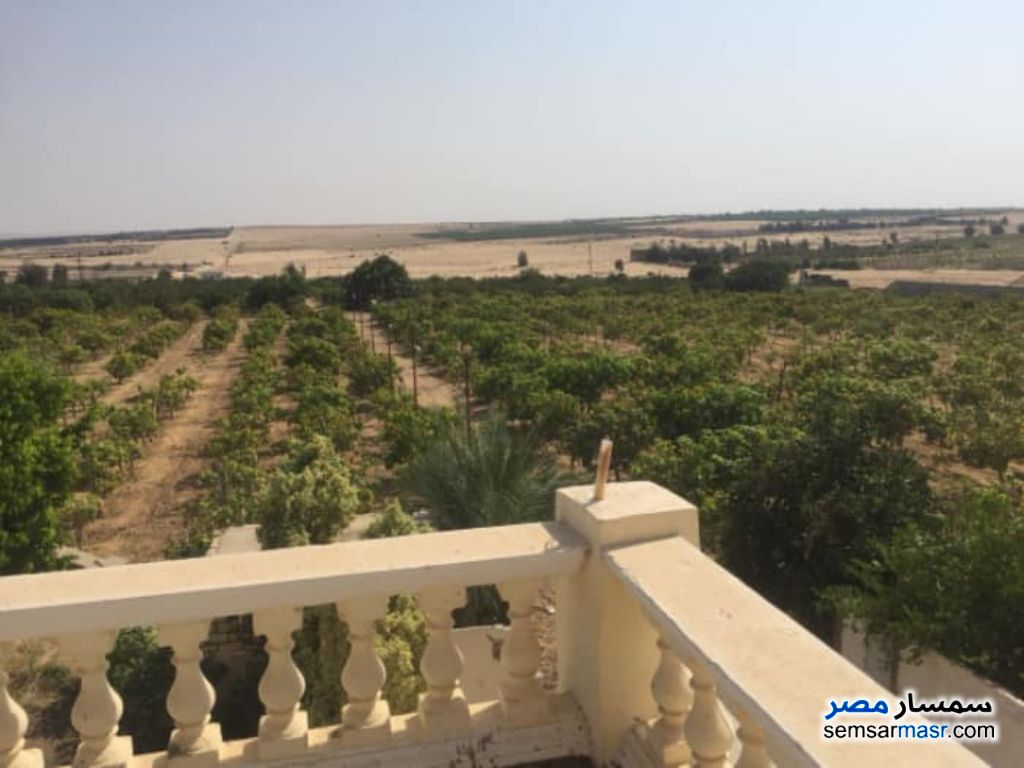 Photo 7 - Farm 6 acre For Sale Cairo Alexandria Desert Road Giza