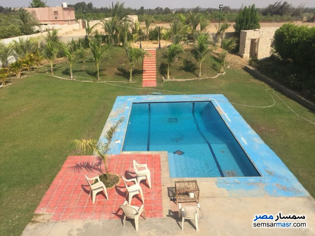 Photo 8 - Farm 6 acre For Sale Cairo Alexandria Desert Road Giza