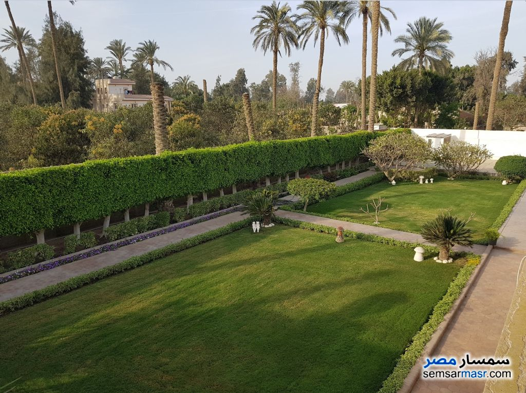 Photo 8 - Land 13 acre For Sale AL Mansoureyah Giza