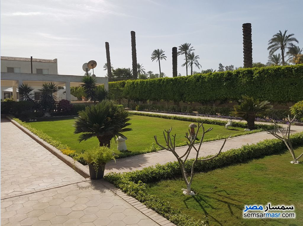 Photo 10 - Land 13 acre For Sale AL Mansoureyah Giza