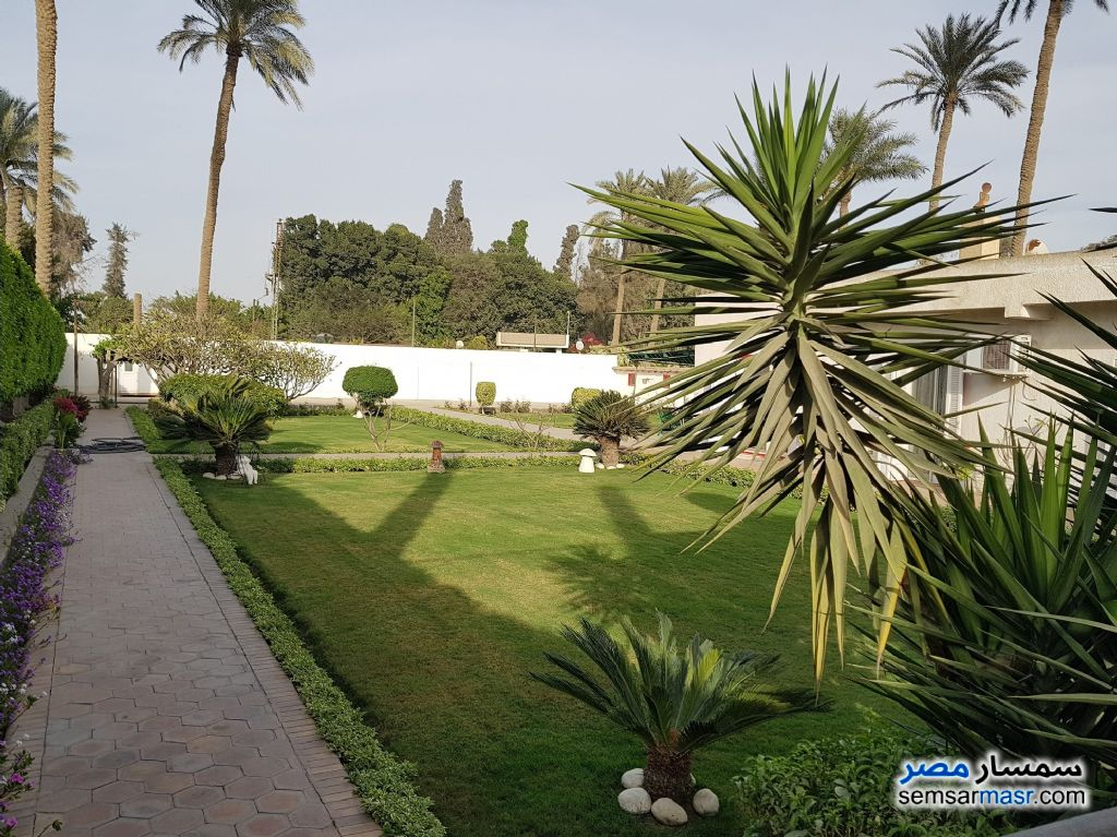 Photo 11 - Land 13 acre For Sale AL Mansoureyah Giza