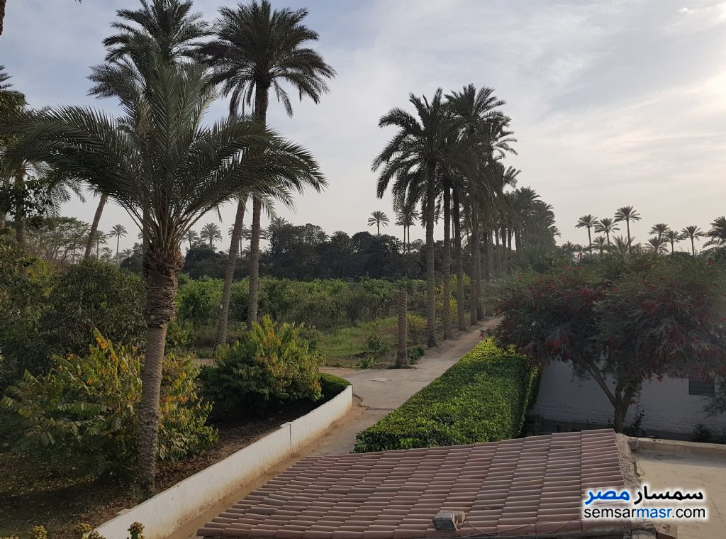 Photo 15 - Land 13 acre For Sale AL Mansoureyah Giza