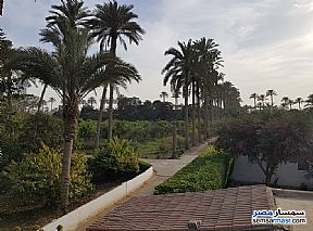 Land 13 acre For Sale AL Mansoureyah Giza - 15