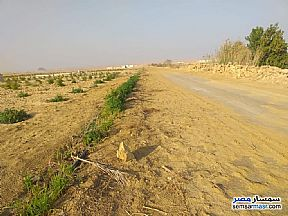 Ad Photo: Farm 7 acre in Fayoum City  Fayyum