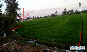 Ad Photo: Farm 3700 sqm in Mansura  Daqahliyah