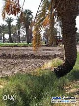 Farm 2 acre For Sale Abu El Matami Buhayrah - 2