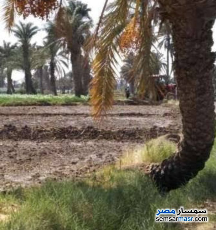 Photo 1 - Farm 2 acre For Sale Abu El Matami Buhayrah
