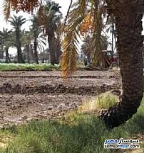 Farm 2 acre For Sale Abu El Matami Buhayrah - 1