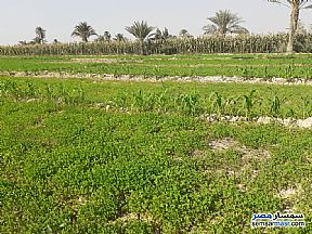 Ad Photo: Farm 200 acre in Fayoum City  Fayyum