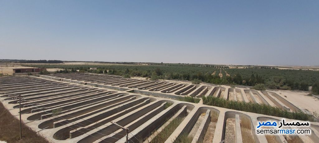 Ad Photo: Farm 510 acre in Wadi Al Natrun  Buhayrah
