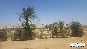 Ad Photo: Farm 80 acre in Tamiya  Fayyum