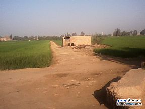 Ad Photo: Farm 7 acre in Sinbillawain  Daqahliyah