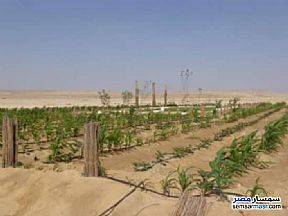 Ad Photo: Farm 5 acre in New Fayoum  Fayyum