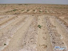 Ad Photo: Farm 3000 acre in Wadi Al Natrun  Buhayrah