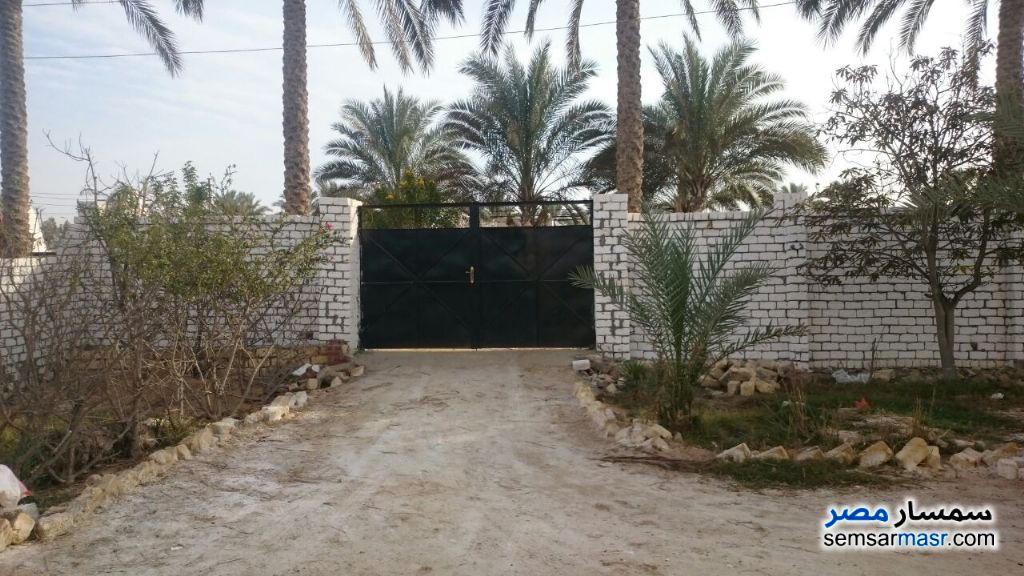 Photo 4 - Villa 4 bedrooms 3 baths 2,950 sqm lux For Sale Fayed Ismailia