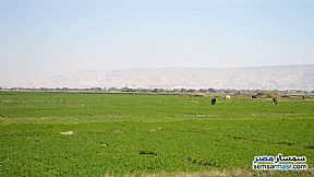 Ad Photo: Farm 400 acre in Farafra  New Valley
