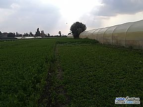Ad Photo: Farm 20 kirat in Shibin El Kom  Minufiyah