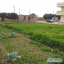 Ad Photo: Farm 10 acre in Fayoum City  Fayyum