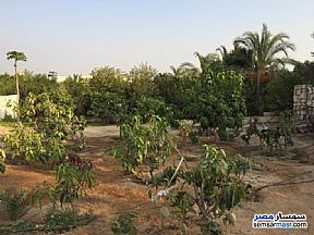 Ad Photo: Farm 8 kirat in Cairo Alexandria Desert Road  Giza