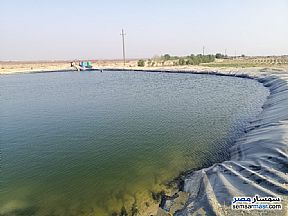Ad Photo: Farm 4 acre in Fayoum City  Fayyum