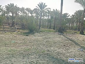 Ad Photo: Farm 200 sqm in New Damietta  Damietta