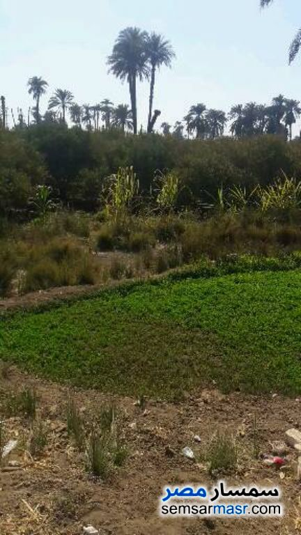 Photo 2 - Land 3 acre For Sale El Fath Asyut