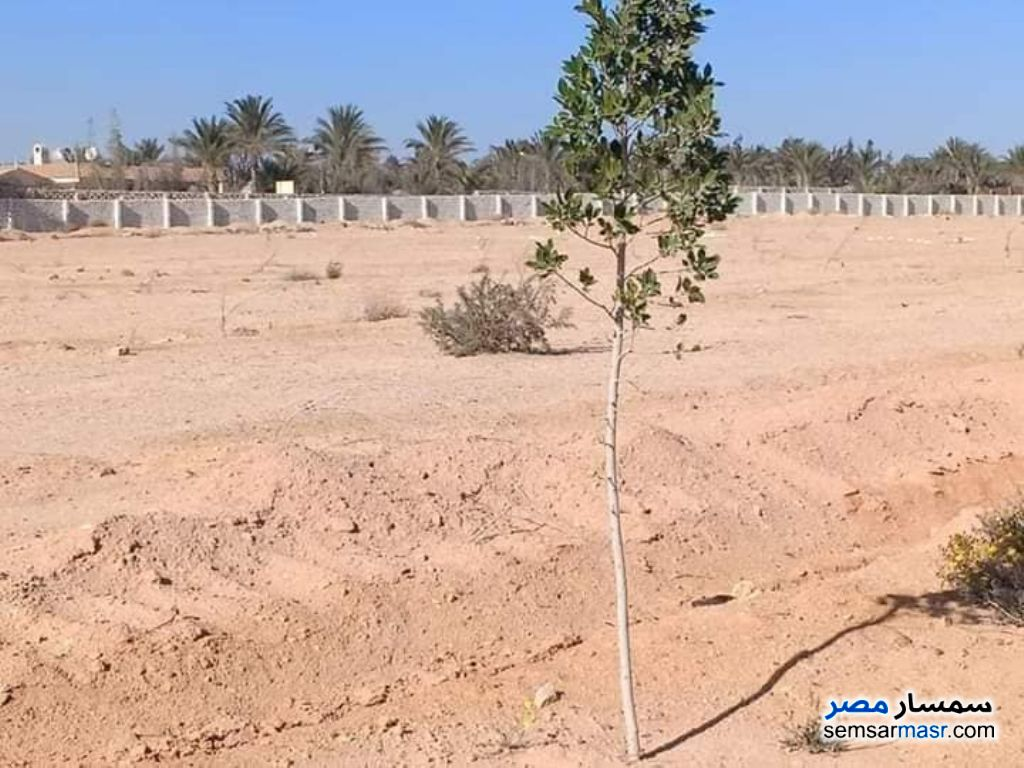 Photo 1 - Land 1,000 sqm For Sale Sphinx City 6th of October