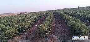 Ad Photo: Farm 20 acre in Minya