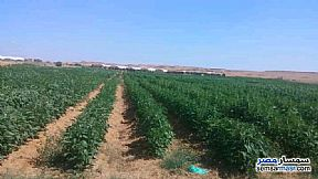Ad Photo: Farm 20 acre in El Ayat  Giza