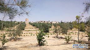 Ad Photo: Farm 5 acre in Wadi Al Natrun  Buhayrah