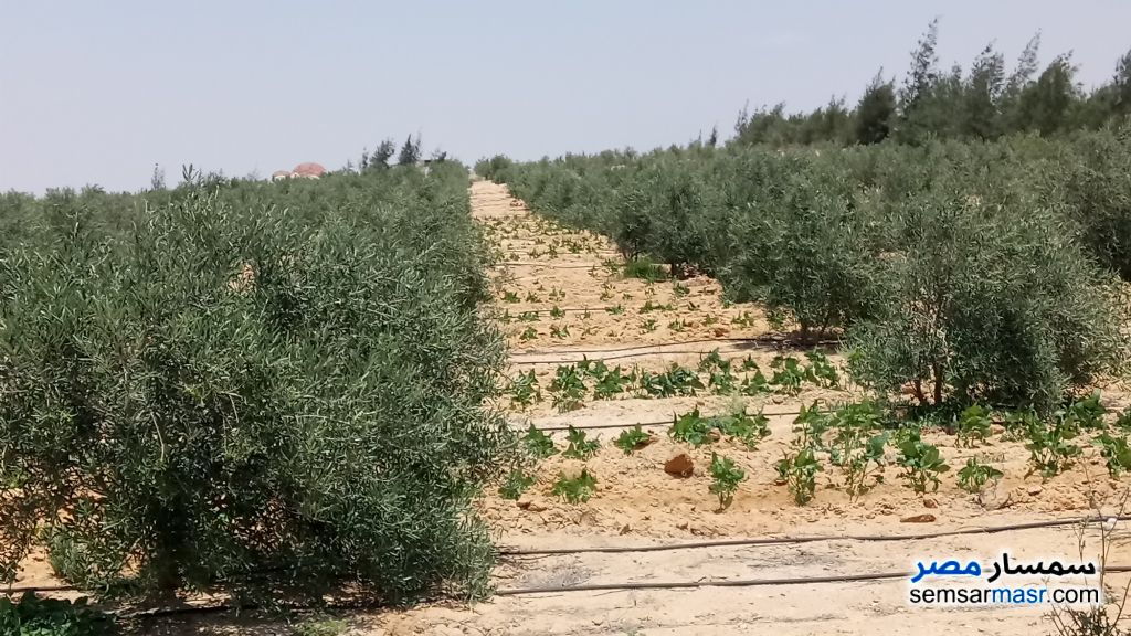 Photo 3 - Farm 5 acre For Sale Wadi Al Natrun Buhayrah