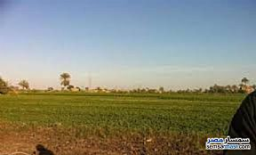 Ad Photo: Farm 20 acre in Mukhabarat Land  6th of October
