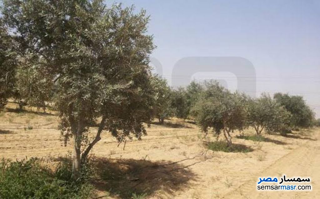 Photo 1 - Farm 15 acre For Rent New Fayoum Fayyum