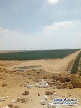 Ad Photo: Farm in New Fayoum  Fayyum