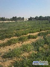 Ad Photo: Farm in Fayoum City  Fayyum