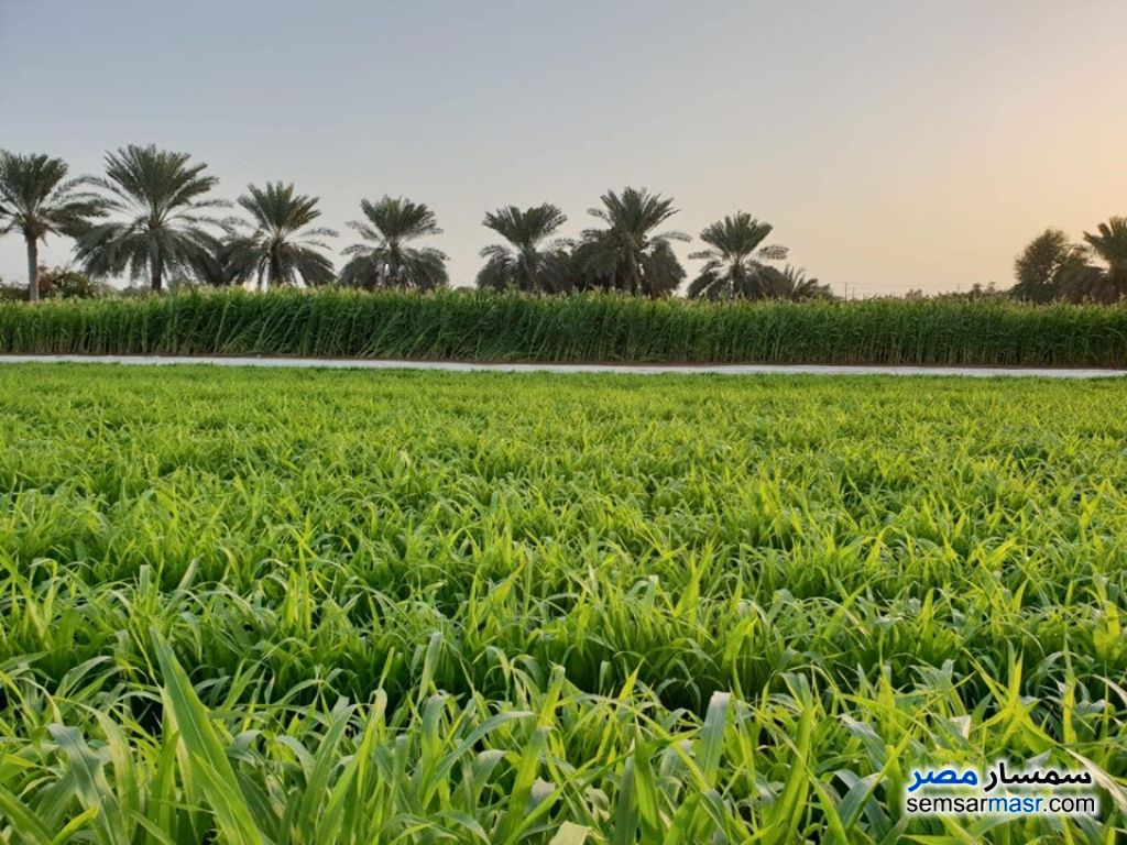 Ad Photo: Farm 13 acre in Etay Al Barud  Buhayrah