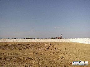 Ad Photo: Farm in Cairo Alexandria Desert Road  Giza