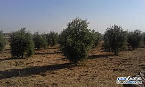 Ad Photo: Farm 5 acre in Shandoura  Suez