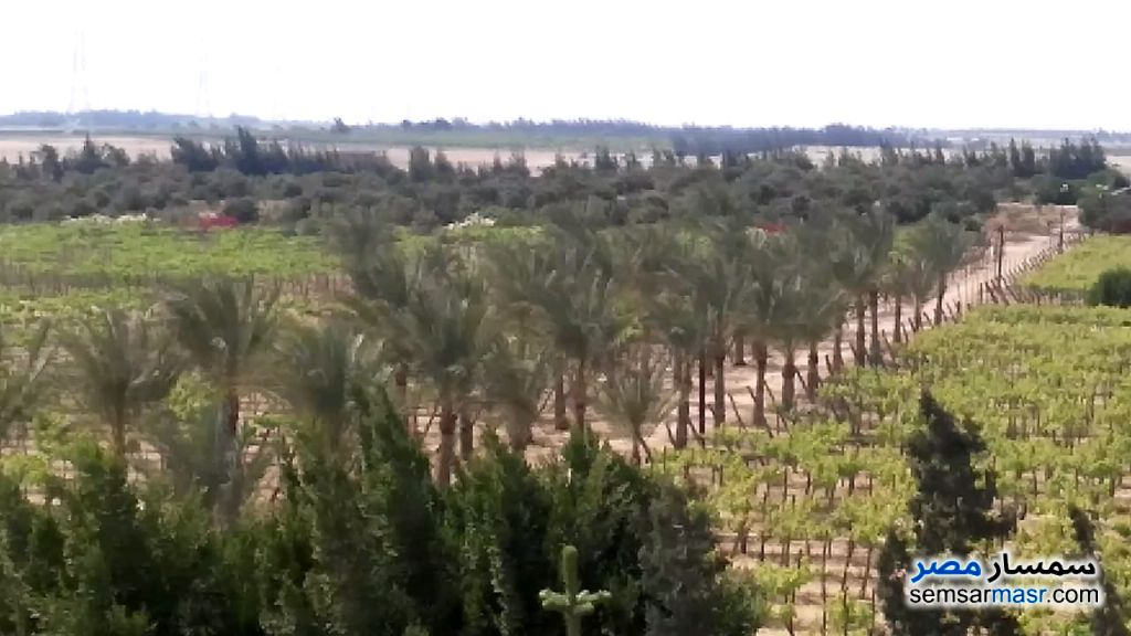 Ad Photo: Farm 70 acre in Wadi Al Natrun  Buhayrah
