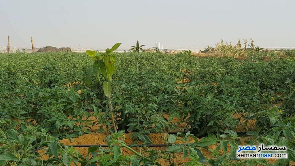 Ad Photo: Farm 100 acre in New Fayoum  Fayyum