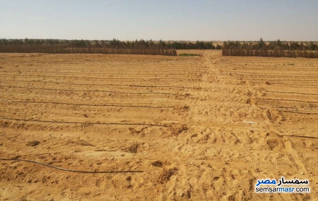 Ad Photo: Farm 120 acre in Wadi Al Natrun  Buhayrah