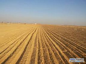 Ad Photo: Farm 140 acre in El Alamein  Matrouh