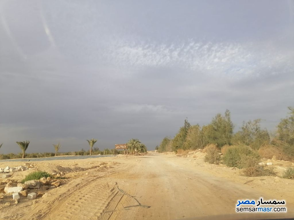 Ad Photo: Farm 78 acre in Fayyum
