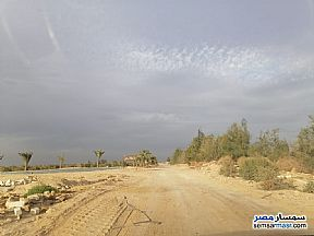 Ad Photo: Farm 75 acre in Tamiya  Fayyum