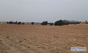 Ad Photo: Farm 4 acre in Shandoura  Suez