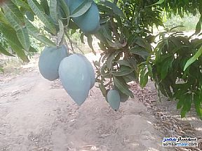 Ad Photo: Farm 5 acre in Sharqia
