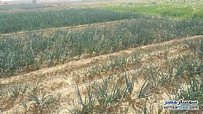 Ad Photo: Farm 11 acre in Tamiya  Fayyum