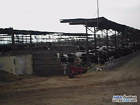 Ad Photo: Farm 116 acre in Cairo Alexadrea Desert Road  Alexandira
