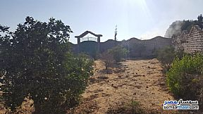 Ad Photo: Farm 2 acre in Sphinx City  6th of October